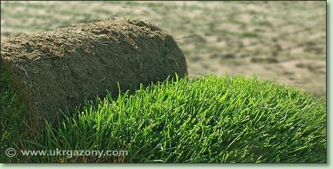 Продукция и цены на рулонный газон